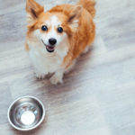 cute-tiny-dog-with-food-bowl-looking-up-at-camera